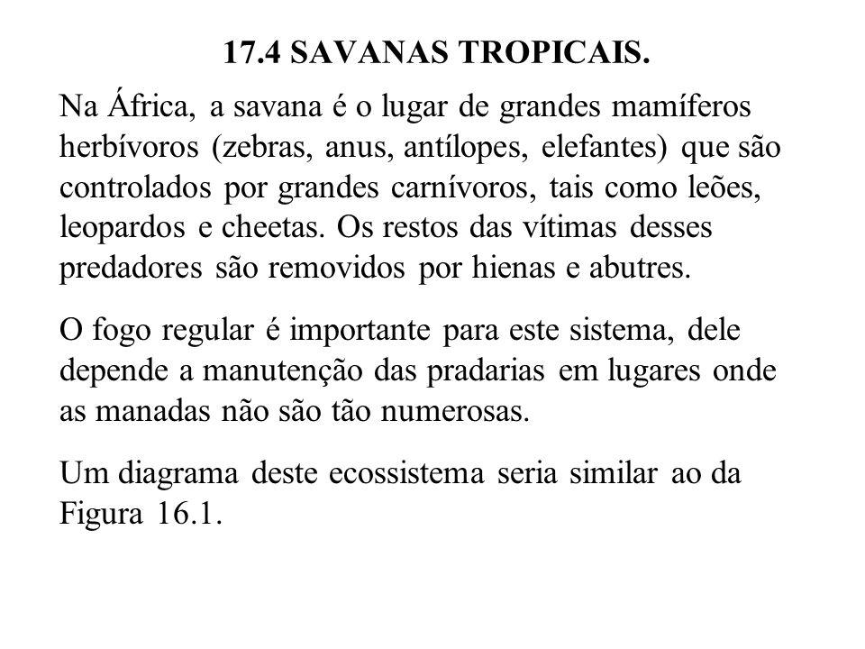 17.4 SAVANAS TROPICAIS. Na África, a savana é o lugar de grandes mamíferos herbívoros (zebras, anus, antílopes, elefantes) que são controlados por gra