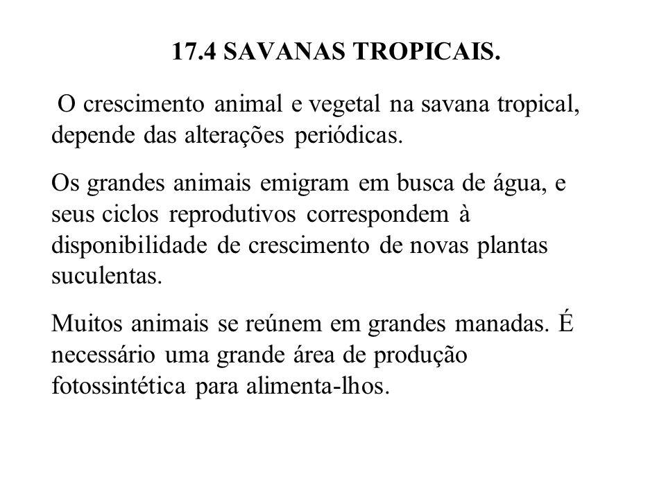 17.4 SAVANAS TROPICAIS. O crescimento animal e vegetal na savana tropical, depende das alterações periódicas. Os grandes animais emigram em busca de á