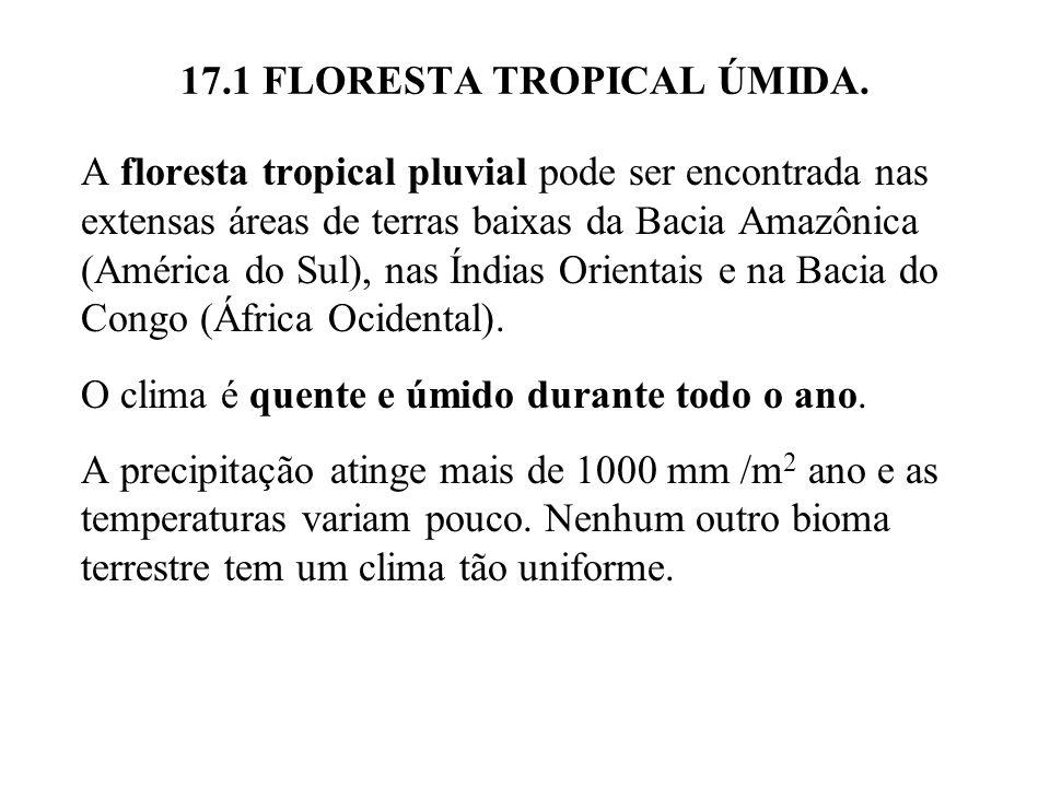 17.1 FLORESTA TROPICAL ÚMIDA. A floresta tropical pluvial pode ser encontrada nas extensas áreas de terras baixas da Bacia Amazônica (América do Sul),