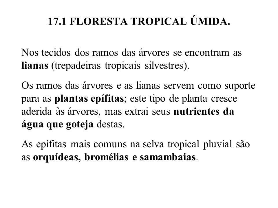 17.1 FLORESTA TROPICAL ÚMIDA. Nos tecidos dos ramos das árvores se encontram as lianas (trepadeiras tropicais silvestres). Os ramos das árvores e as l