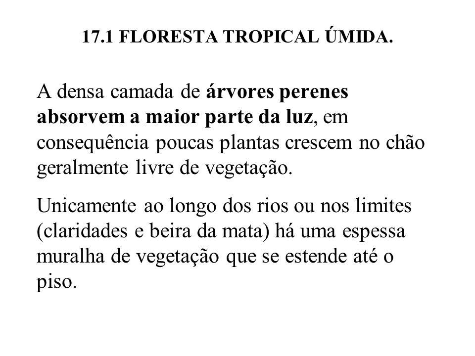 17.1 FLORESTA TROPICAL ÚMIDA. A densa camada de árvores perenes absorvem a maior parte da luz, em consequência poucas plantas crescem no chão geralmen