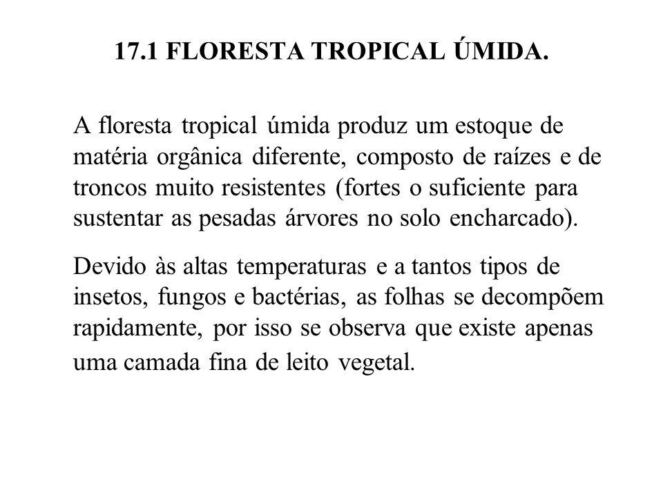 17.1 FLORESTA TROPICAL ÚMIDA. A floresta tropical úmida produz um estoque de matéria orgânica diferente, composto de raízes e de troncos muito resiste