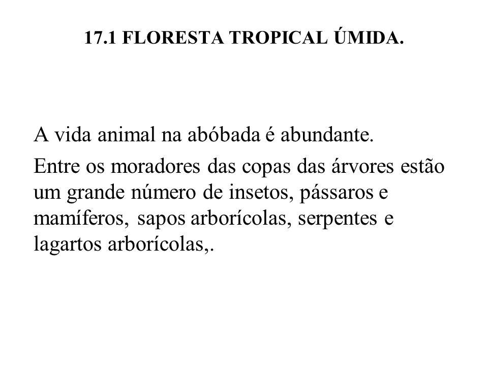 17.1 FLORESTA TROPICAL ÚMIDA. A vida animal na abóbada é abundante. Entre os moradores das copas das árvores estão um grande número de insetos, pássar