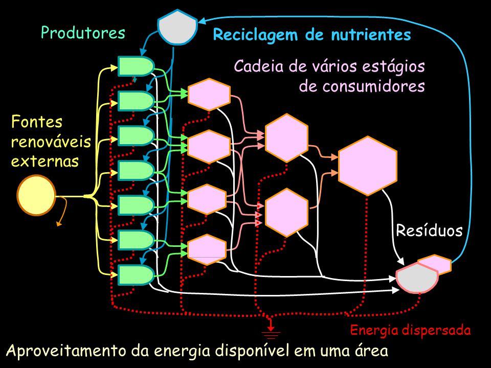 Aproveitamento da energia disponível em uma área Cadeia de vários estágios de consumidores Energia dispersada Fontes renováveis externas Produtores Re