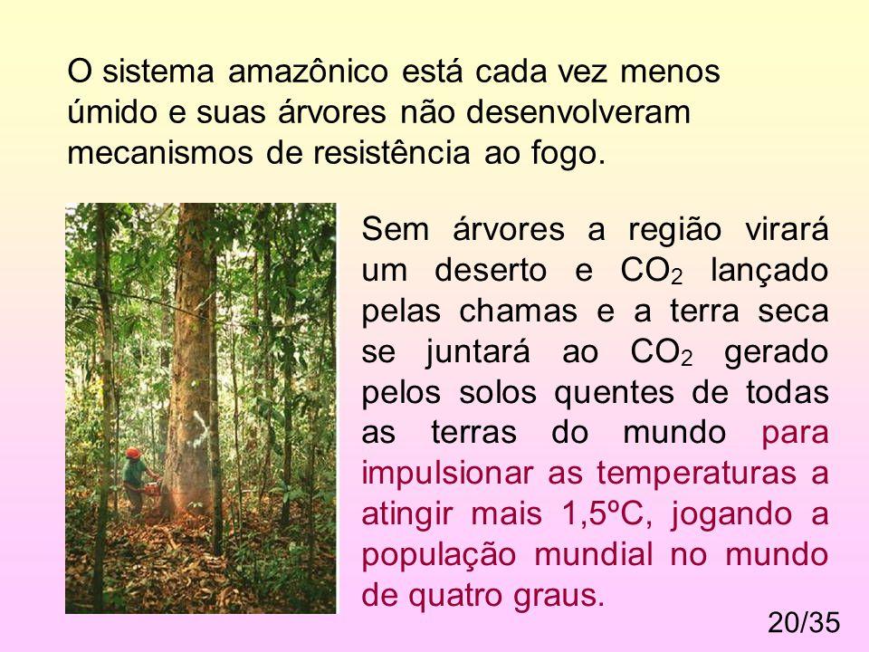 20/35 O sistema amazônico está cada vez menos úmido e suas árvores não desenvolveram mecanismos de resistência ao fogo.. Sem árvores a região virará u