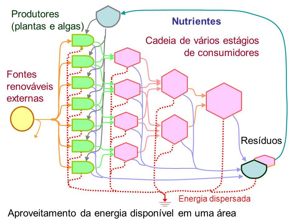 Aproveitamento da energia disponível em uma área Cadeia de vários estágios de consumidores Energia dispersada Fontes renováveis externas Produtores (plantas e algas) Resíduos Nutrientes