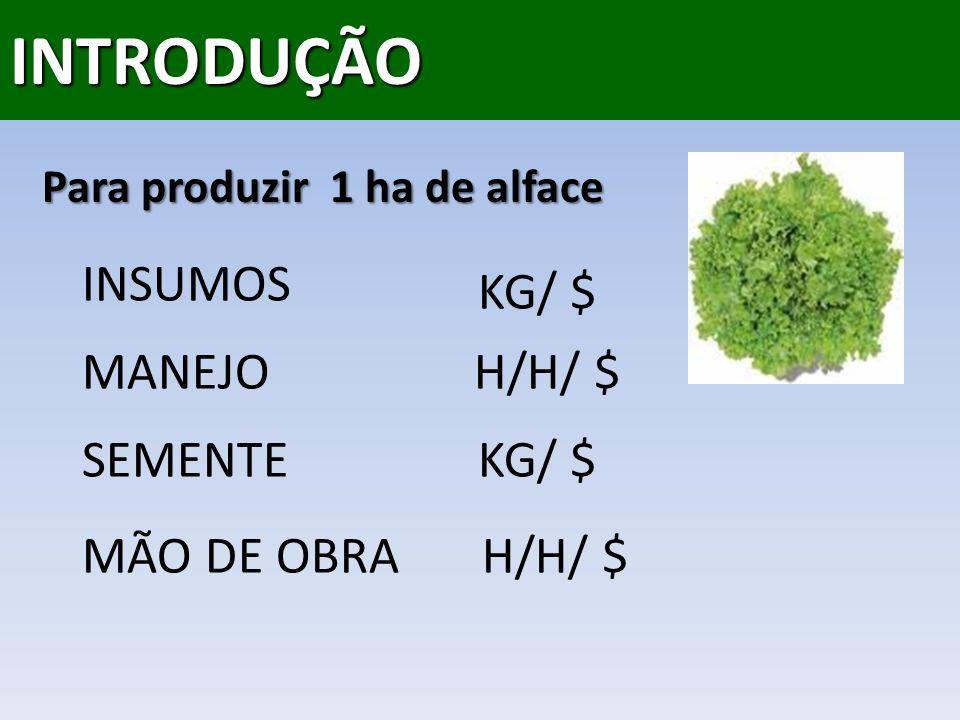 INTRODUÇÃO Para produzir 1 ha de alface INSUMOS MANEJO SEMENTE MÃO DE OBRA KG/ $ H/H/ $ KG/ $