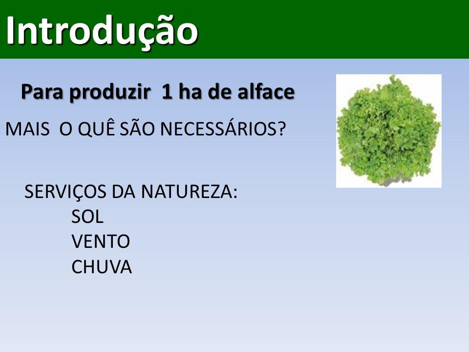 Introdução Para produzir 1 ha de alface MAIS O QUÊ SÃO NECESSÁRIOS.