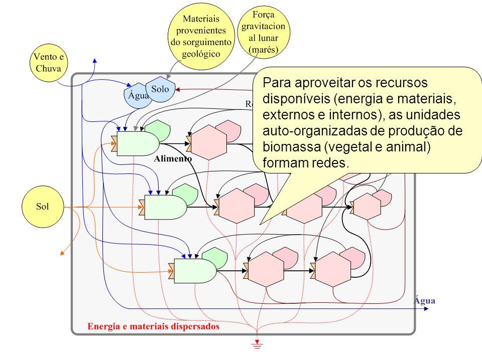 Para aproveitar os recursos disponíveis (energia e materiais, externos e internos), as unidades auto-organizadas de produção de biomassa (vegetal e an