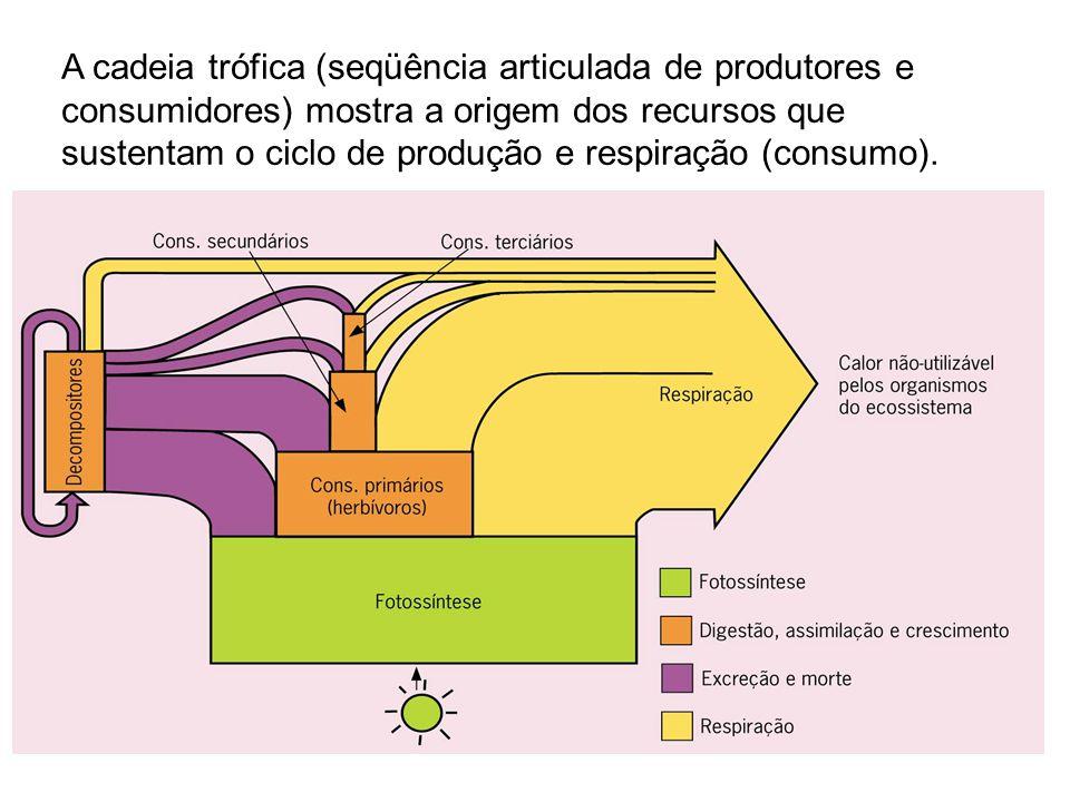 A cadeia trófica (seqüência articulada de produtores e consumidores) mostra a origem dos recursos que sustentam o ciclo de produção e respiração (cons