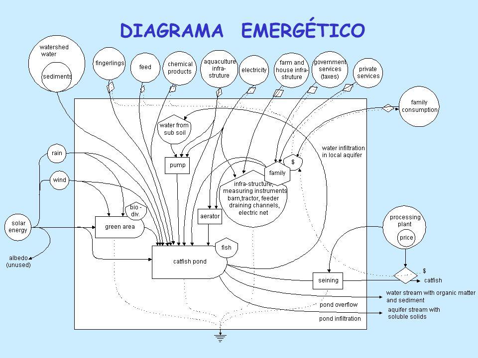 ANALISE EMERGÉTICA Permite comparar fluxos diferentes.
