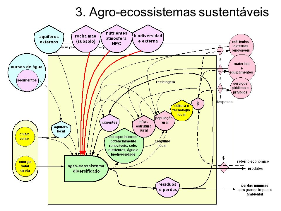 Agro-ecossistema diversificado sustentável A agricultura sustentável é uma possibilidade real, tanto do ponto de vista técnico quanto social.