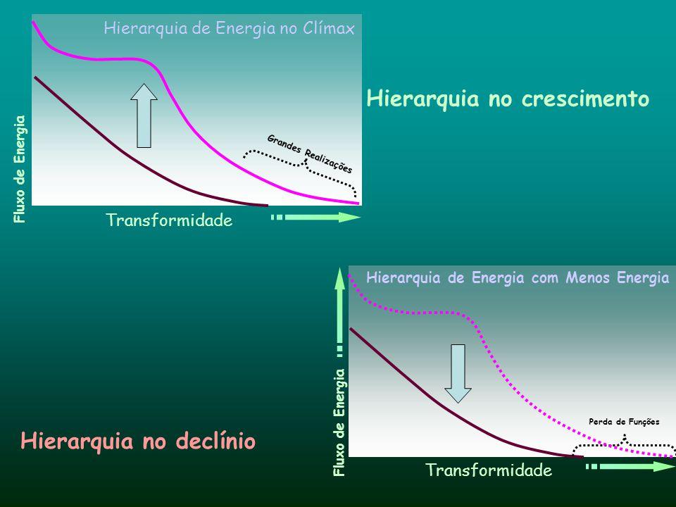 Hierarquia no crescimento Hierarquia no declínio Hierarquia de Energia no Clímax Hierarquia de Energia com Menos Energia Transformidade Fluxo de Energ