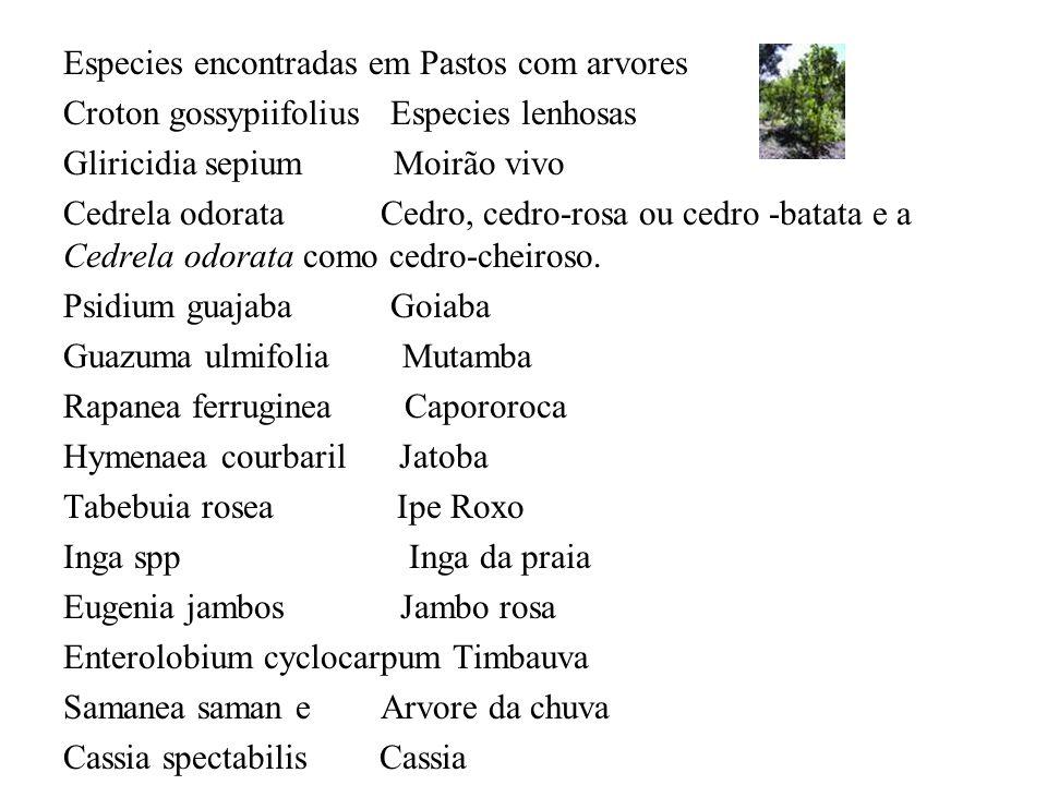 Especies encontradas em Pastos com arvores Croton gossypiifolius Especies lenhosas Gliricidia sepium Moirão vivo Cedrela odorata Cedro, cedro-rosa ou
