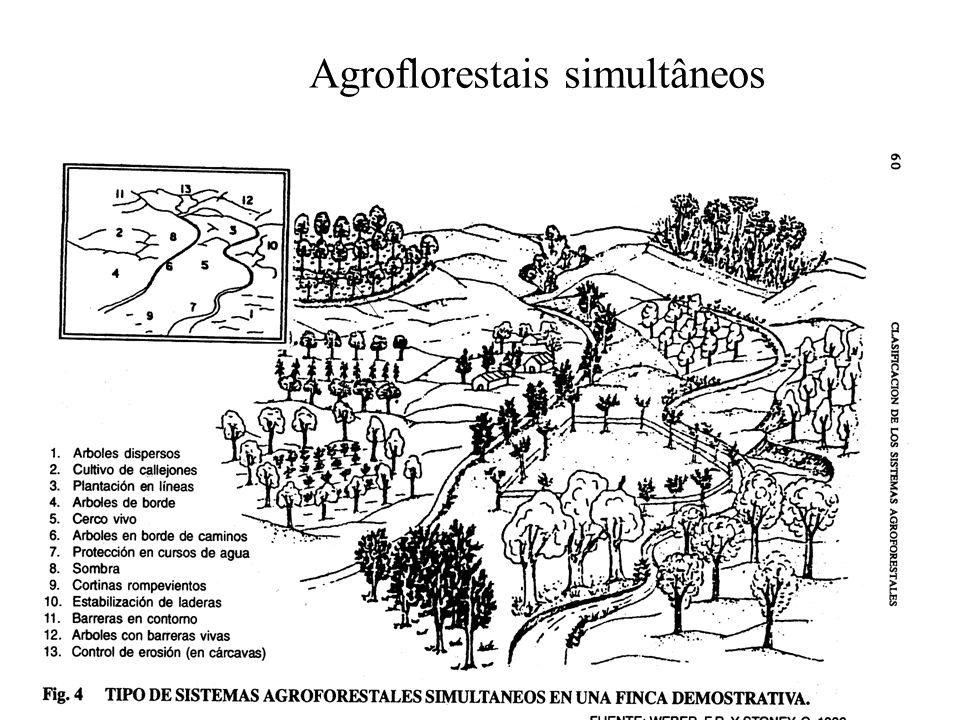 Agroflorestais simultâneos