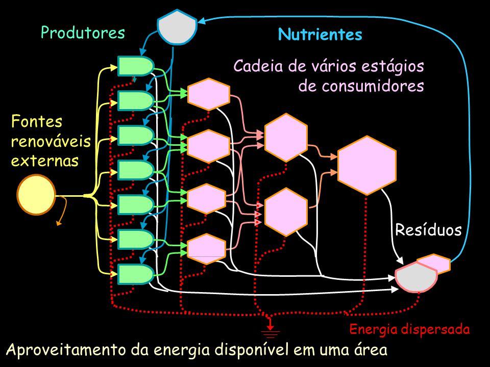Unidades auto-catalíticas P Q Produtor Consumidor R Q Parte do trabalho produzido permanece no sistema como energia estrutural que reforça a interação