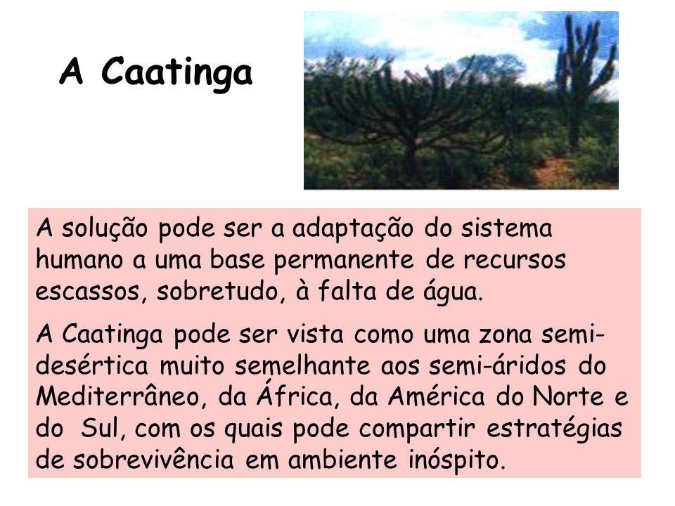 A Caatinga A solução pode ser a adaptação do sistema humano a uma base permanente de recursos escassos, sobretudo, à falta de água. A Caatinga pode se