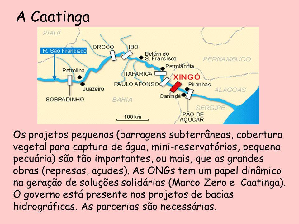 A Caatinga Os projetos pequenos (barragens subterrâneas, cobertura vegetal para captura de água, mini-reservatórios, pequena pecuária) são tão importa