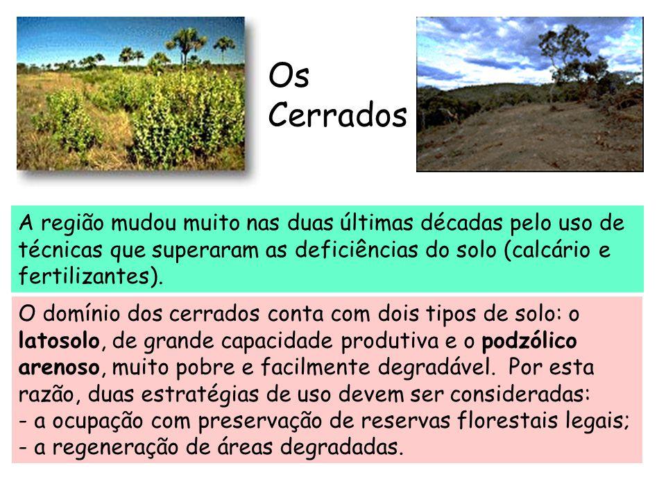 Os Cerrados O domínio dos cerrados conta com dois tipos de solo: o latosolo, de grande capacidade produtiva e o podzólico arenoso, muito pobre e facil
