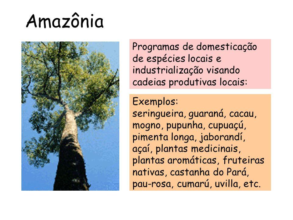Amazônia Exemplos: seringueira, guaraná, cacau, mogno, pupunha, cupuaçú, pimenta longa, jaborandí, açaí, plantas medicinais, plantas aromáticas, frute