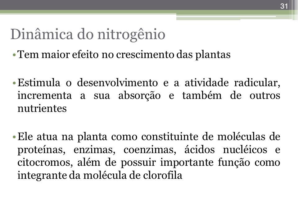31 Tem maior efeito no crescimento das plantas Estimula o desenvolvimento e a atividade radicular, incrementa a sua absorção e também de outros nutrie