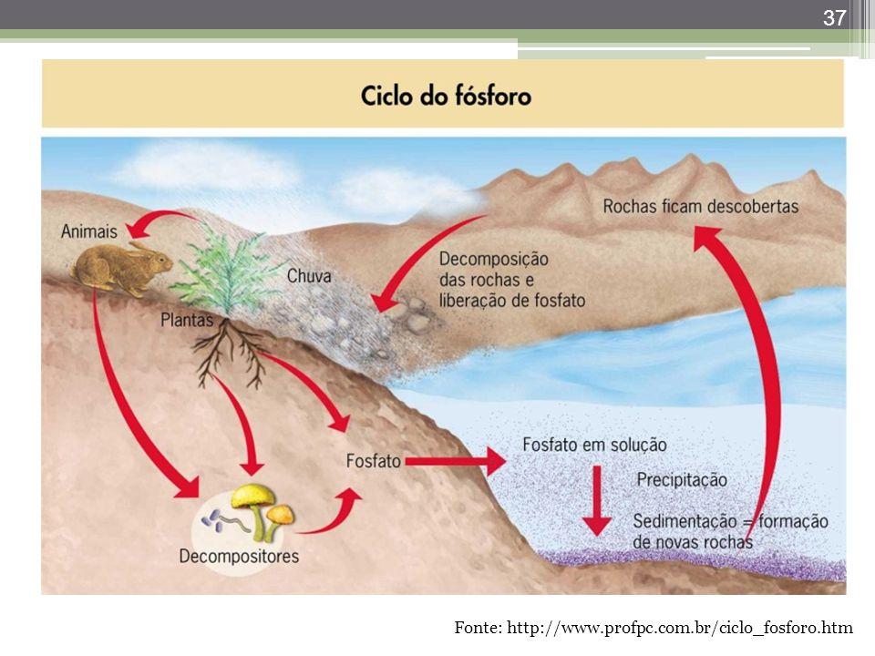37 Fonte: http://www.profpc.com.br/ciclo_fosforo.htm