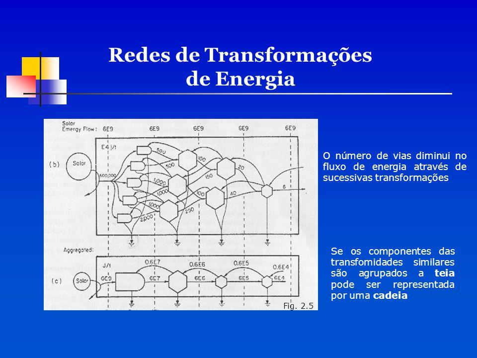 O número de vias diminui no fluxo de energia através de sucessivas transformações Se os componentes das transfomidades similares são agrupados a teia