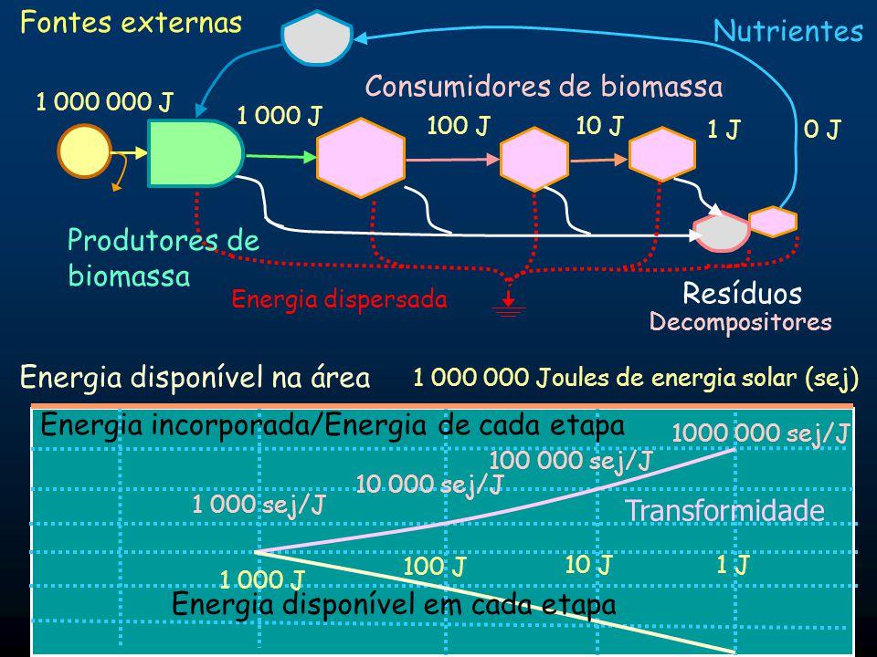 Aproveitamento da energia disponível em uma área Cadeia de vários estágios de consumidores Energia dispersada Fontes renováveis externas Produtores Resíduos Reciclagem de nutrientes