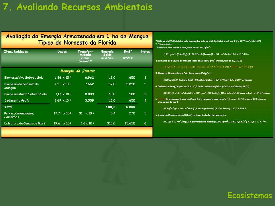7. Avaliando Recursos Ambientais Ecosistemas Avaliação da Emergia Armazenada em 1 ha de Mangue Típico do Noroeste da Florida Item, UnidadesDadosTransf