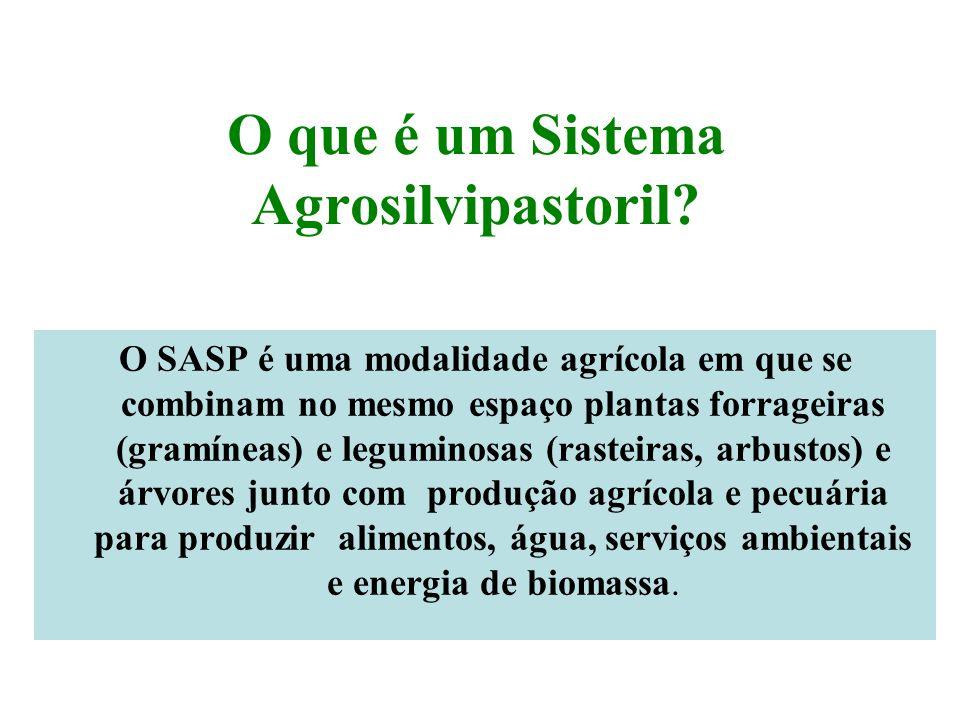 O que é um Sistema Agrosilvipastoril? O SASP é uma modalidade agrícola em que se combinam no mesmo espaço plantas forrageiras (gramíneas) e leguminosa