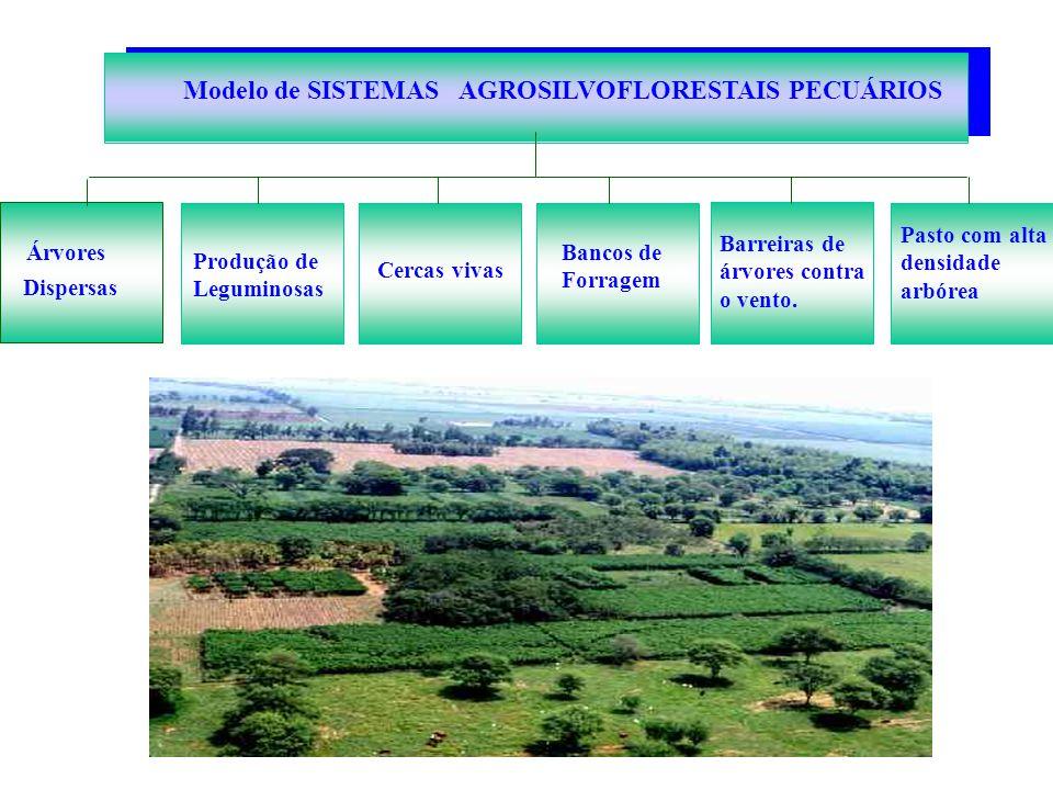 Dispersas Pasto com alta densidade arbórea Modelo de SISTEMAS AGROSILVOFLORESTAIS PECUÁRIOS Árvores Produção de Leguminosas Cercas vivas Bancos de For