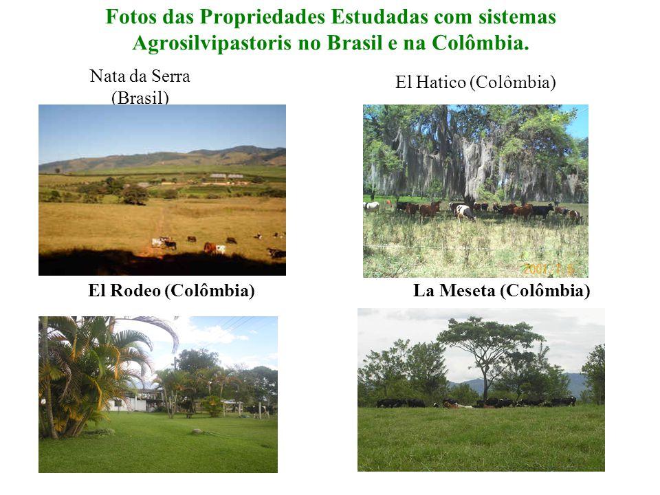Fotos das Propriedades Estudadas com sistemas Agrosilvipastoris no Brasil e na Colômbia. La Meseta (Colômbia) El Hatico (Colômbia) Nata da Serra (Bras