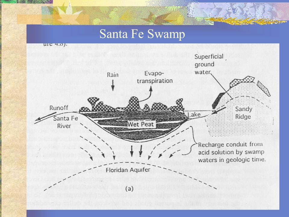 Santa Fe Swamp