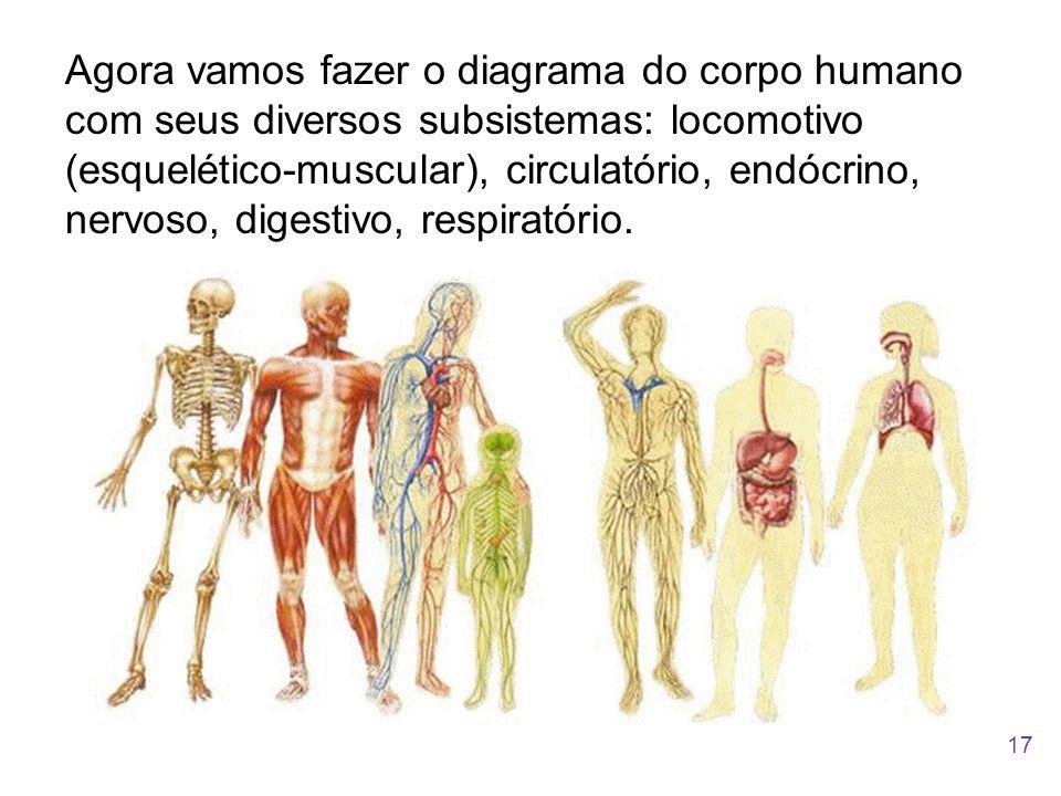 Agora vamos fazer o diagrama do corpo humano com seus diversos subsistemas: locomotivo (esquelético-muscular), circulatório, endócrino, nervoso, digestivo, respiratório.