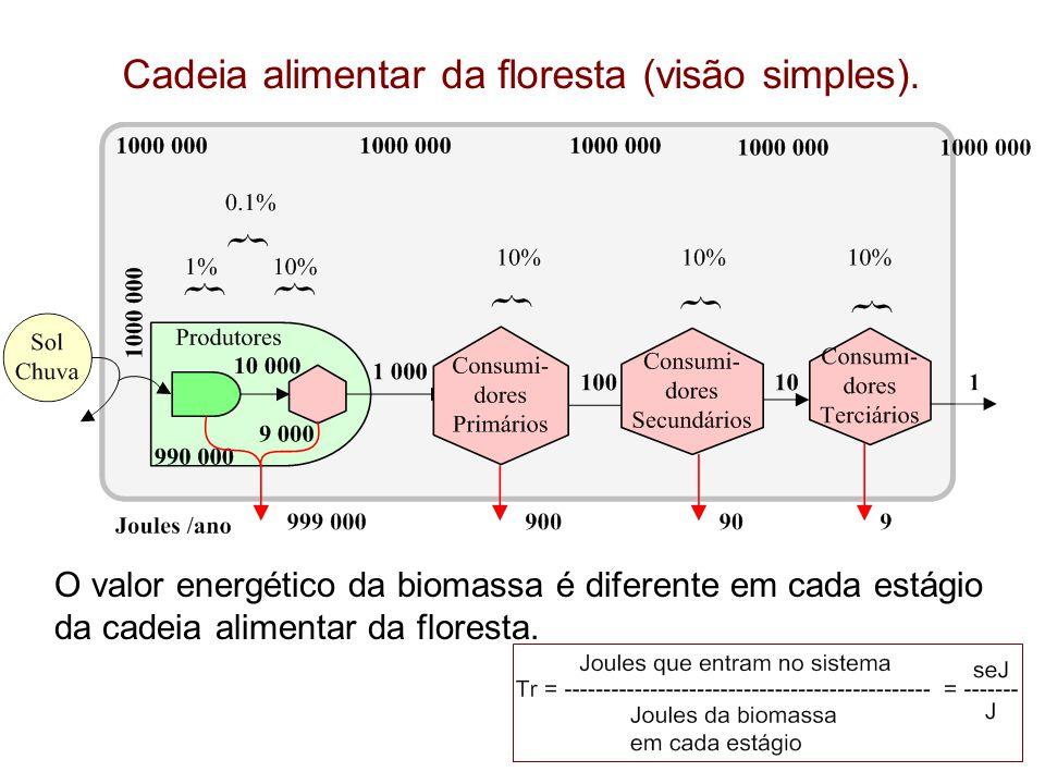 Cadeia alimentar da floresta (visão simples). O valor energético da biomassa é diferente em cada estágio da cadeia alimentar da floresta.