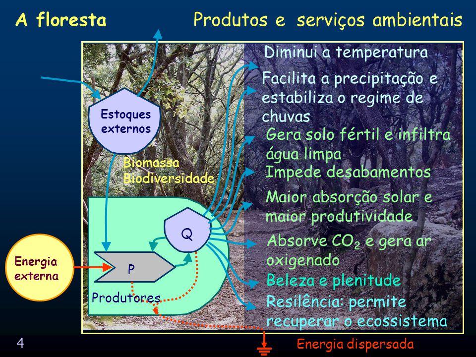 3 Produtores P Q Energia externa Interações Energia dispersada Estoques externos A floresta: relações plantas-solo Maior porosidade no solo Solubilização de minerais Maior umidade do solo Fixação de nitrogênio Amortece golpe da chuva Absorção de gases Bombeamento de materiais Açúcar para a micro-biota Matéria orgânica para a macro-biota Efeito esponja de água