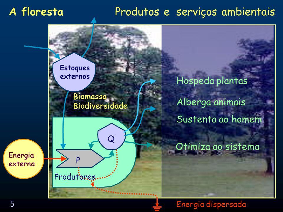 5 Produtos e serviços ambientais Biomassa Biodiversidade A floresta P Q Energia externa Energia dispersada Estoques externos Produtores Hospeda plantas Sustenta ao homem Alberga animais Otimiza ao sistema