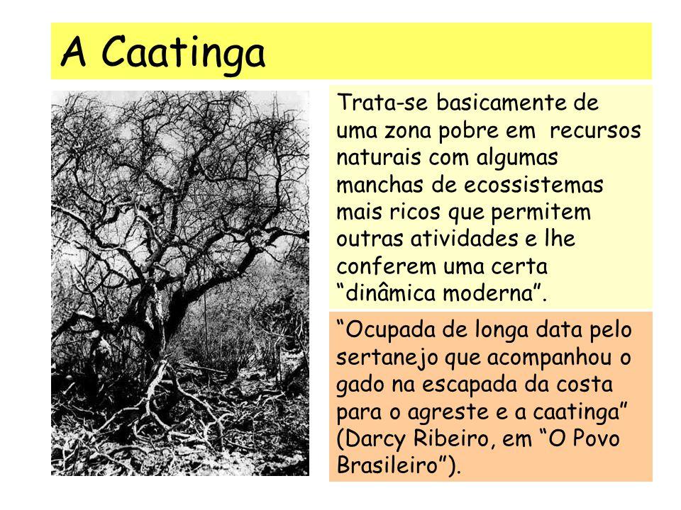 A Caatinga Ocupada de longa data pelo sertanejo que acompanhou o gado na escapada da costa para o agreste e a caatinga (Darcy Ribeiro, em O Povo Brasileiro ).