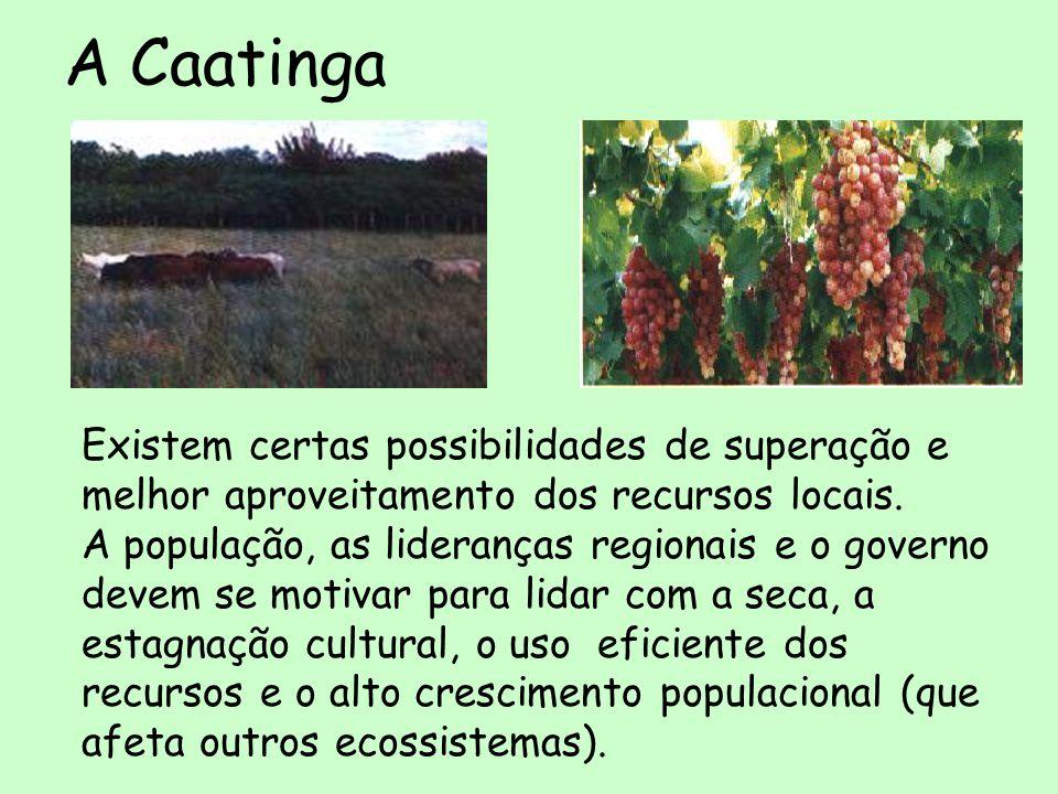 A Caatinga Os projetos pequenos (barragens subterrâneas, cobertura vegetal para captura de água, mini-reservatórios, pequena pecuária) são tão importantes, ou mais, que as grandes obras (represas, açudes).