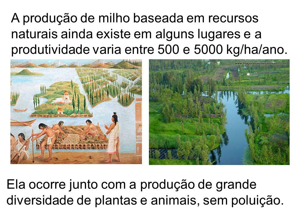 A produção de milho baseada em recursos naturais ainda existe em alguns lugares e a produtividade varia entre 500 e 5000 kg/ha/ano. Ela ocorre junto c