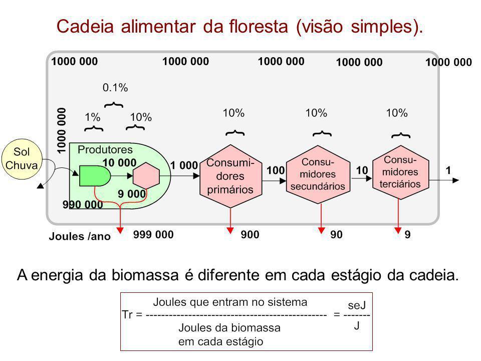 Cadeia alimentar da floresta (visão simples). A energia da biomassa é diferente em cada estágio da cadeia.