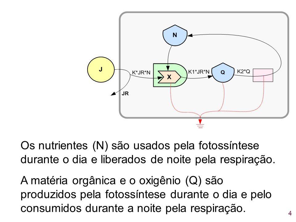 4 Os nutrientes (N) são usados pela fotossíntese durante o dia e liberados de noite pela respiração. A matéria orgânica e o oxigênio (Q) são produzido
