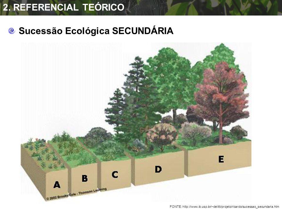 FONTE: http://www.ib.usp.br/~delitti/projeto/ricardo/sucessao_secundaria.htm Sucessão Ecológica SECUNDÁRIA 2. REFERENCIAL TEÓRICO