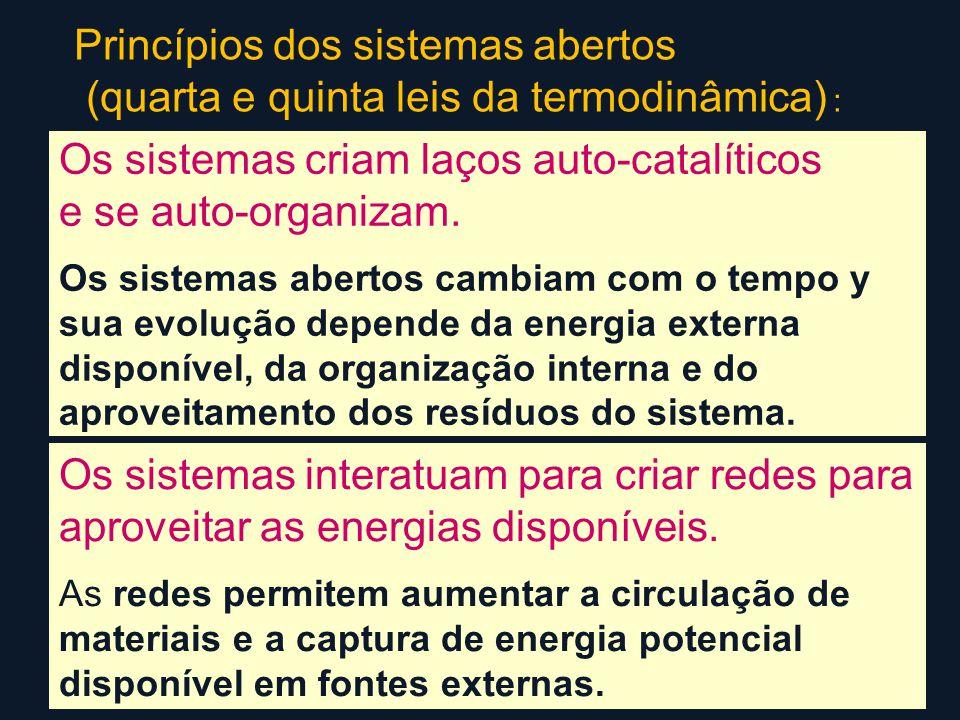 Princípios dos sistemas abertos (quarta e quinta leis da termodinâmica) : Os sistemas criam laços auto-catalíticos e se auto-organizam.