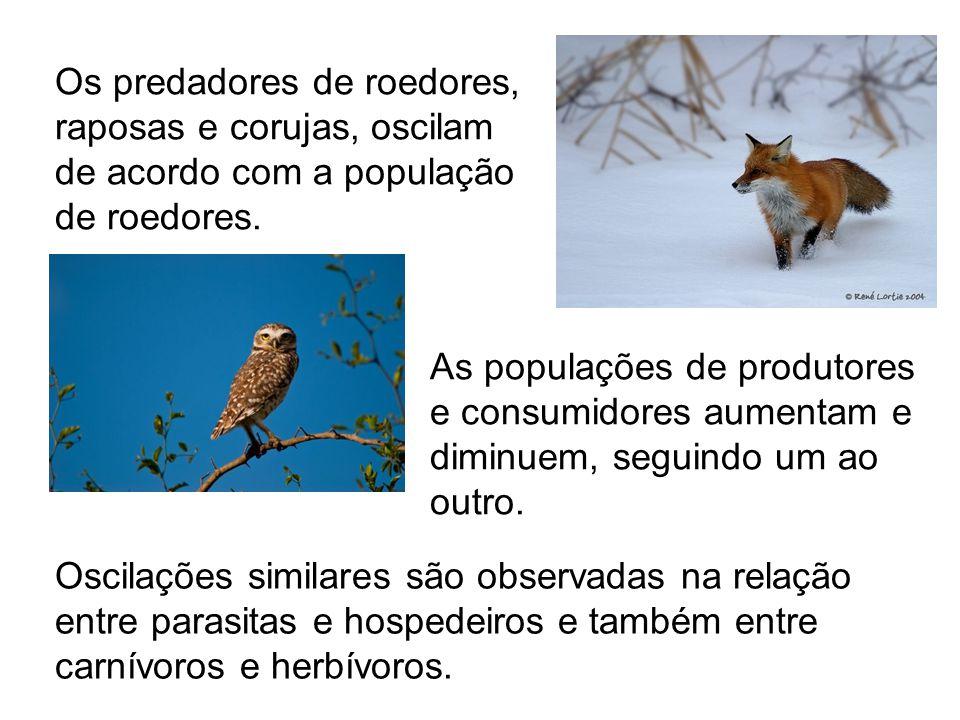 Os predadores de roedores, raposas e corujas, oscilam de acordo com a população de roedores. As populações de produtores e consumidores aumentam e dim