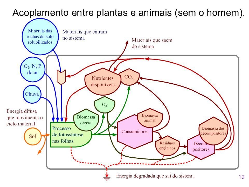 Acoplamento entre plantas e animais (sem o homem). 19