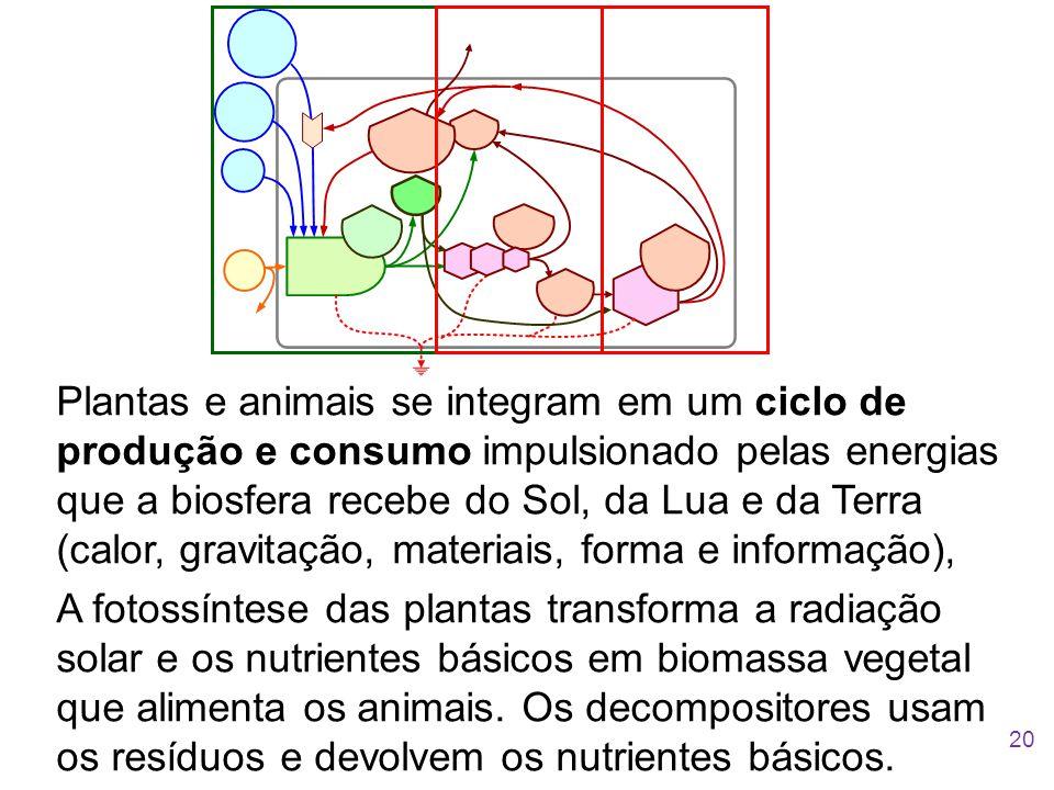 Plantas e animais se integram em um ciclo de produção e consumo impulsionado pelas energias que a biosfera recebe do Sol, da Lua e da Terra (calor, gr