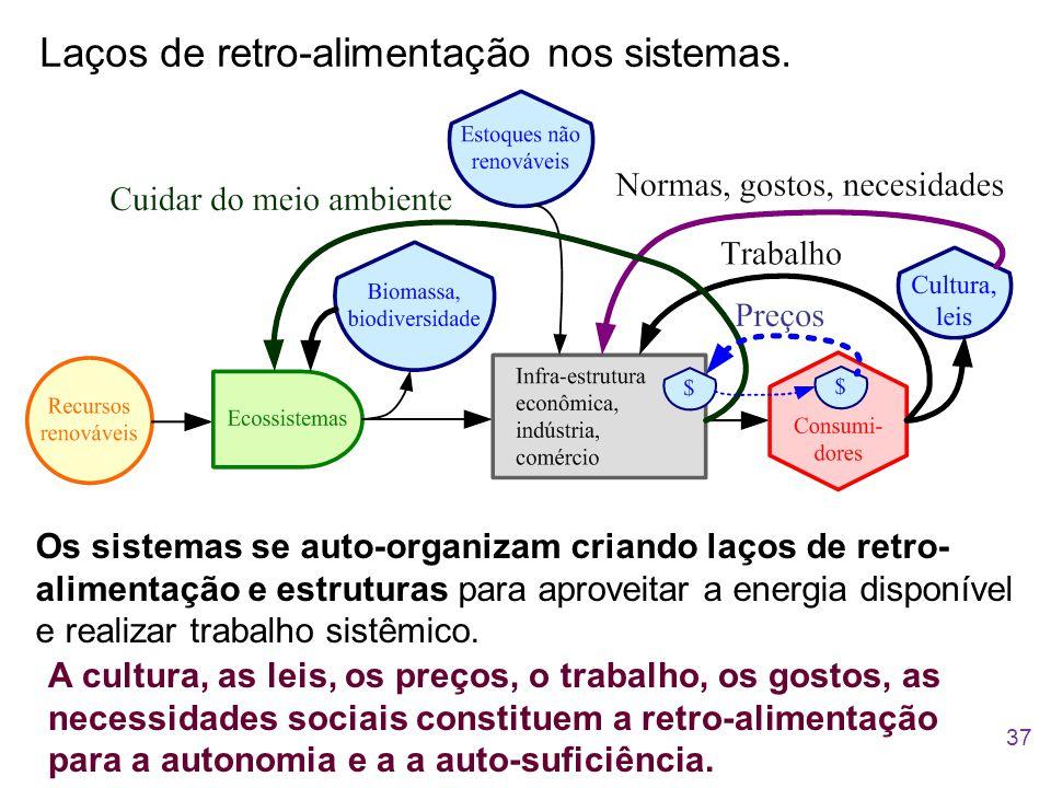 Laços de retro-alimentação nos sistemas. Os sistemas se auto-organizam criando laços de retro- alimentação e estruturas para aproveitar a energia disp