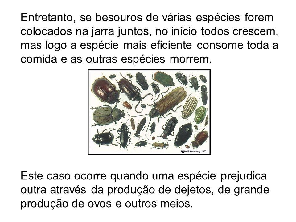 Entretanto, se besouros de várias espécies forem colocados na jarra juntos, no início todos crescem, mas logo a espécie mais eficiente consome toda a