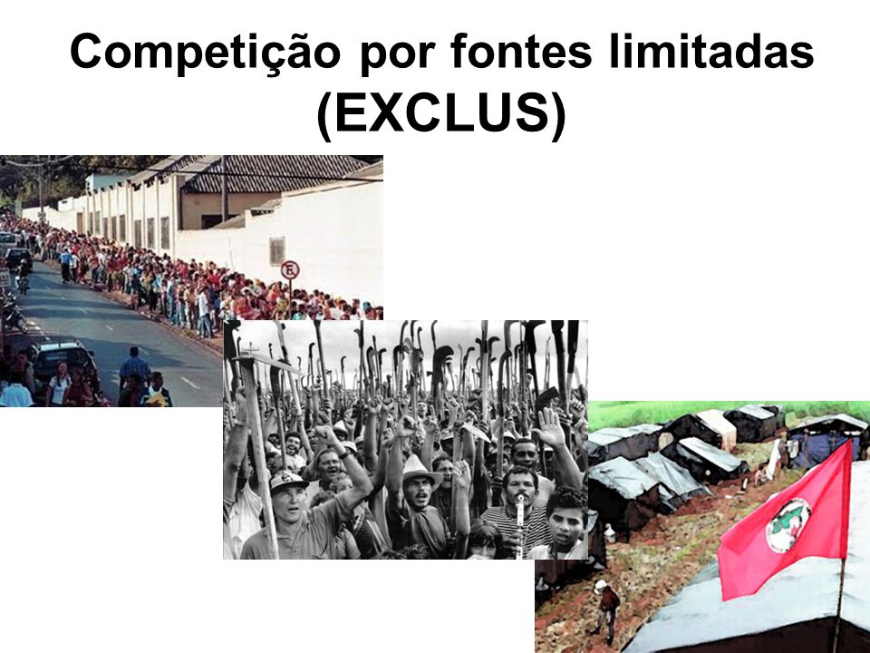 Competição por fontes limitadas (EXCLUS)